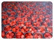 canned strawberry|Canned Fruits|